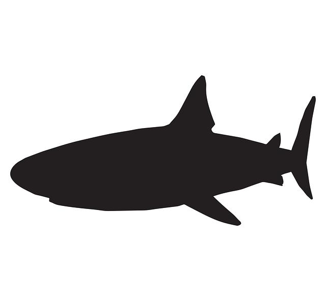 requin, mer, poissons