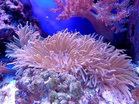 corail banc de sable aquarium - Sable aquarium, les 5 meilleurs