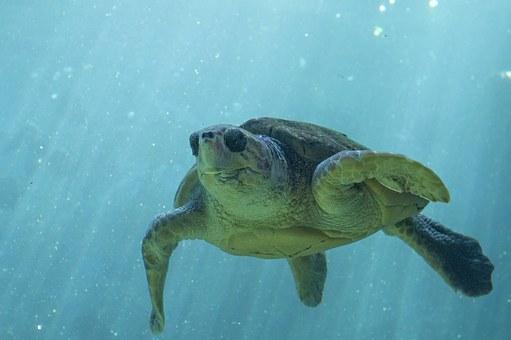 mer, tortue, océan