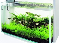 aquarium design – Les 3 meilleurs