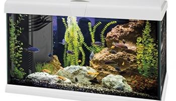 Aquarium 40 litres, les 5 meilleurs