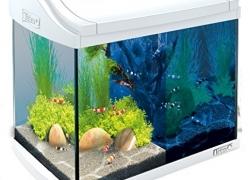 Les 5 meilleurs Aquarium 20 litres