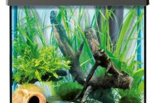 Aquarium 30 litres, les 5 meilleurs